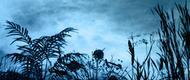 Télécharger des brushes Nature pour photoshop