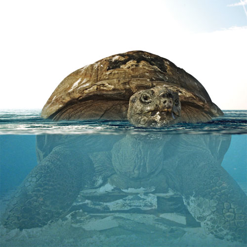 Montage photo La tortue géante avec Photoshop
