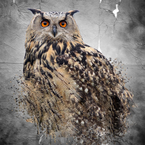 Owls Design V2 avec Photoshop