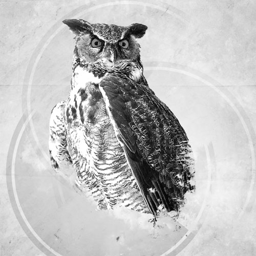 Montage photo Owls design avec photoshop