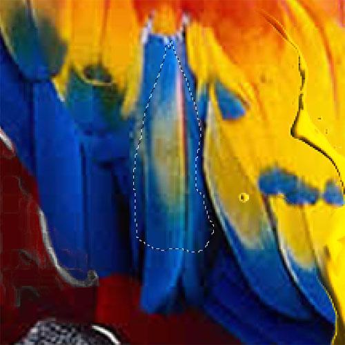 Parrot design avec photoshop