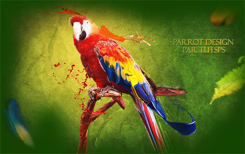 Parrot design avec photoshop