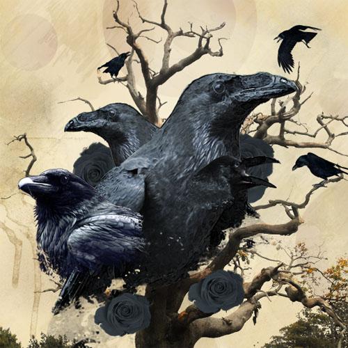 Tuto Montage Photo Raven design