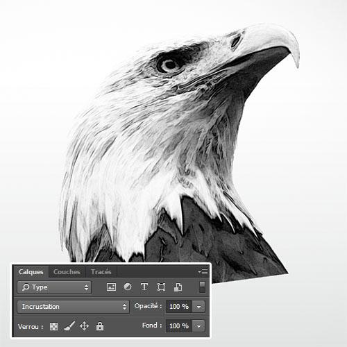 L 39 aigle royal avec adobe photoshop tuto photoshop les meilleurs tutoriaux photoshop gratuit - Dessin d aigle royal ...