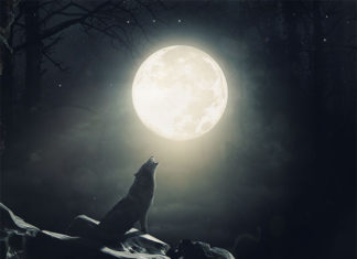 tutoriel vidéo le hurlement de loup avec photoshop