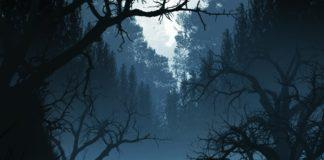 tutoriel photoshop Toute Seule dans la forêt avec Photoshop