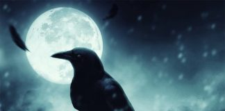 Photomanipulation le corbeau de la mort